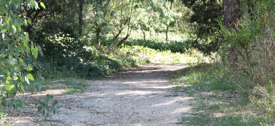 Path along Barkers Creek at Castlemaine Botanical Gardens