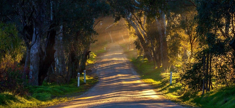Image: Council maintains many unsealed roads across the shire. Photo by Richard Baxter.  Link to child page: Rural vegetation