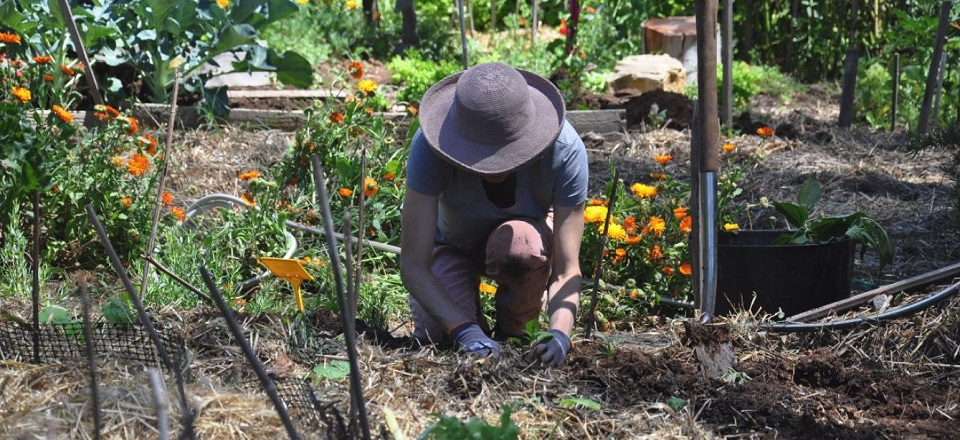 Image: Gardener working in the Newstead Community Garden.  Link to child page: Home based business