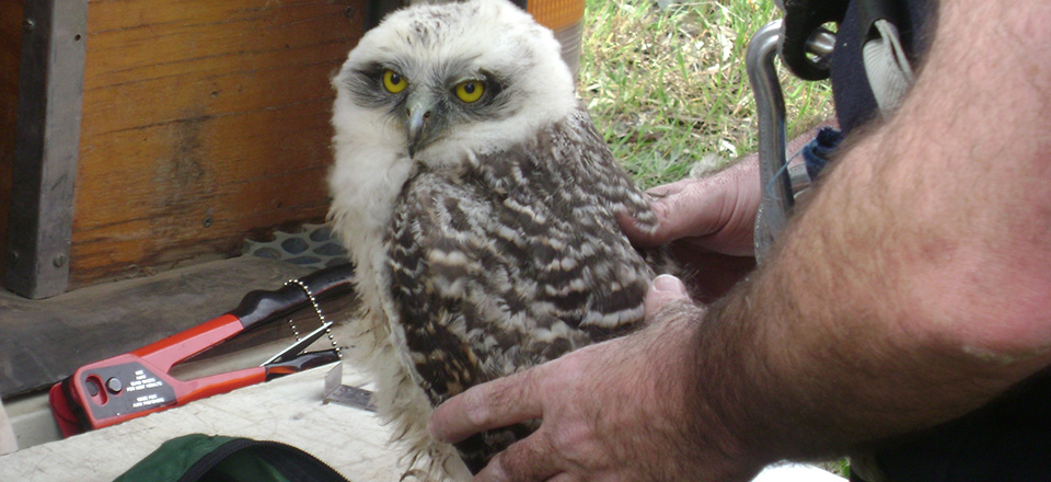 Image: An owl being rescued.  Link to child page: Wildlife rescue