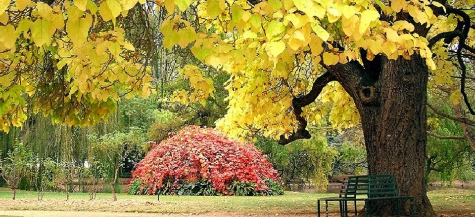 Image: Castlemaine Botanical Gardens 3  Link to child page: Castlemaine Botanical Gardens trees